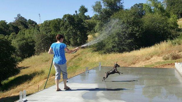 Хозяйка думала, что играет с псом, кидая палку в озеро, а через час он умер