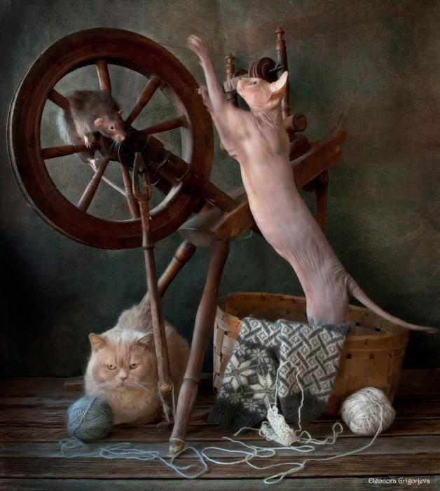 Попал в колесо. / Фото: Элеонора Григорьева.