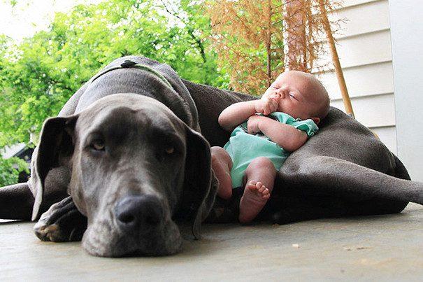 Забавные фото малышей, спящих со своими питомцами