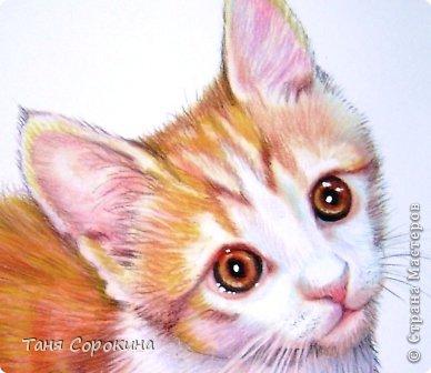 Картина панно рисунок День рождения Рисование и живопись Кот по прозвищу Сэмэн сухая пастель Пастель фото 2