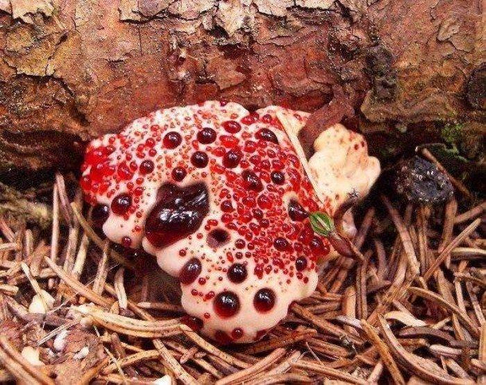 Удивительные разновидности грибов