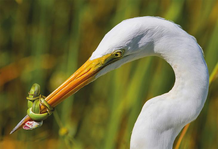 Сейчас вылетит птичка: выбраны лучшие фотографии птиц 2017 года
