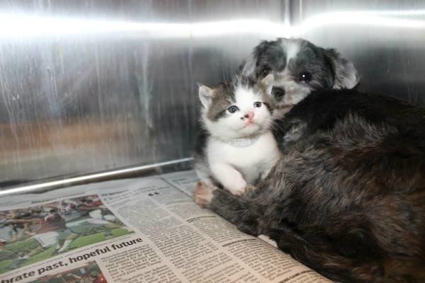 Собака кормила и защищала котенка, которого бросили на дне глубокого оврага