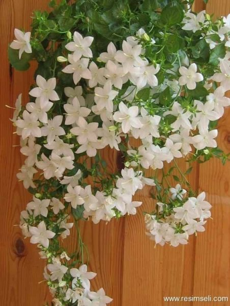 Домашнее цветоводство. Цветы…