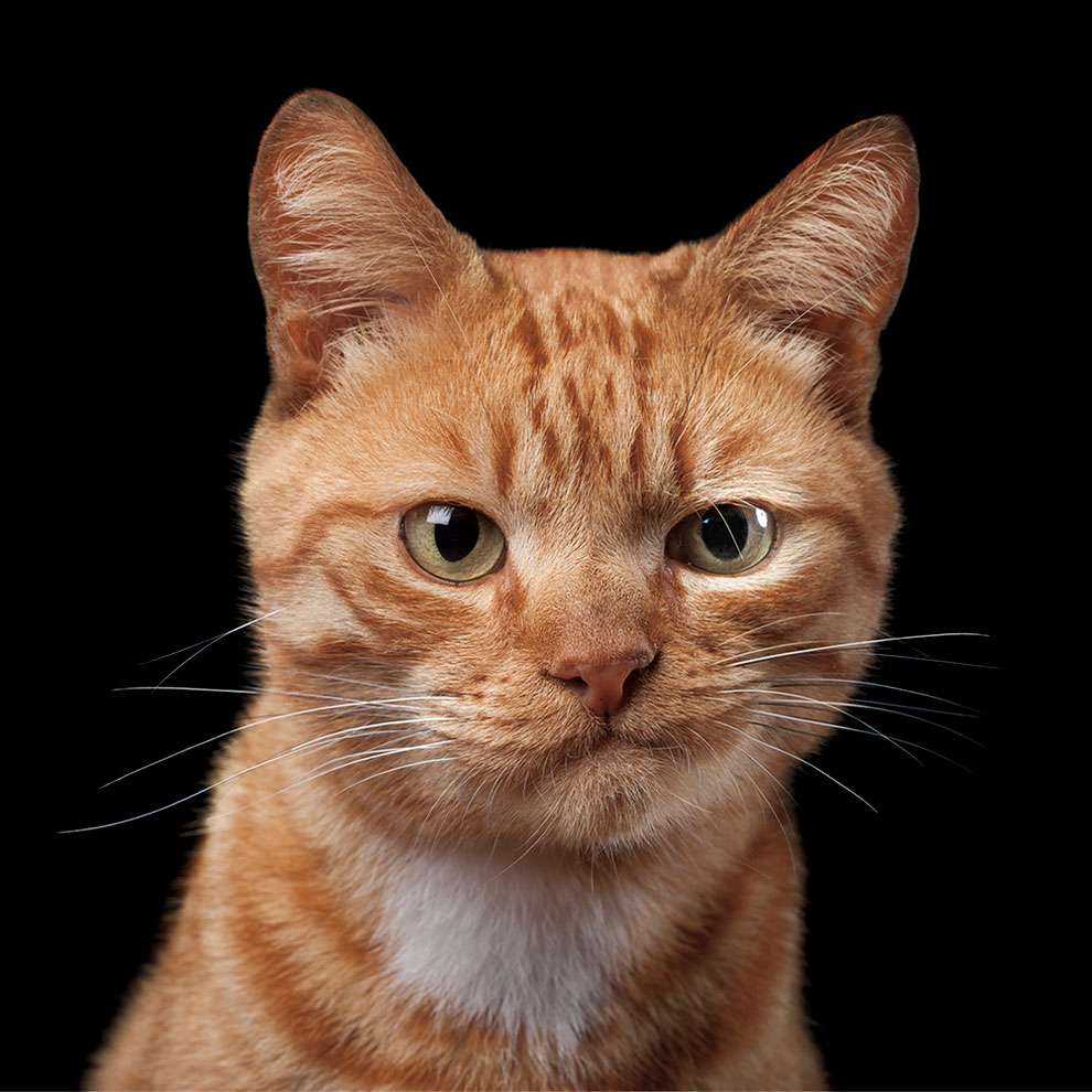 Фотопортреты этих котов четко отражают их характер и личность!