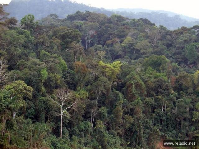 Красота Амазонских лесов (фотопутешествие)