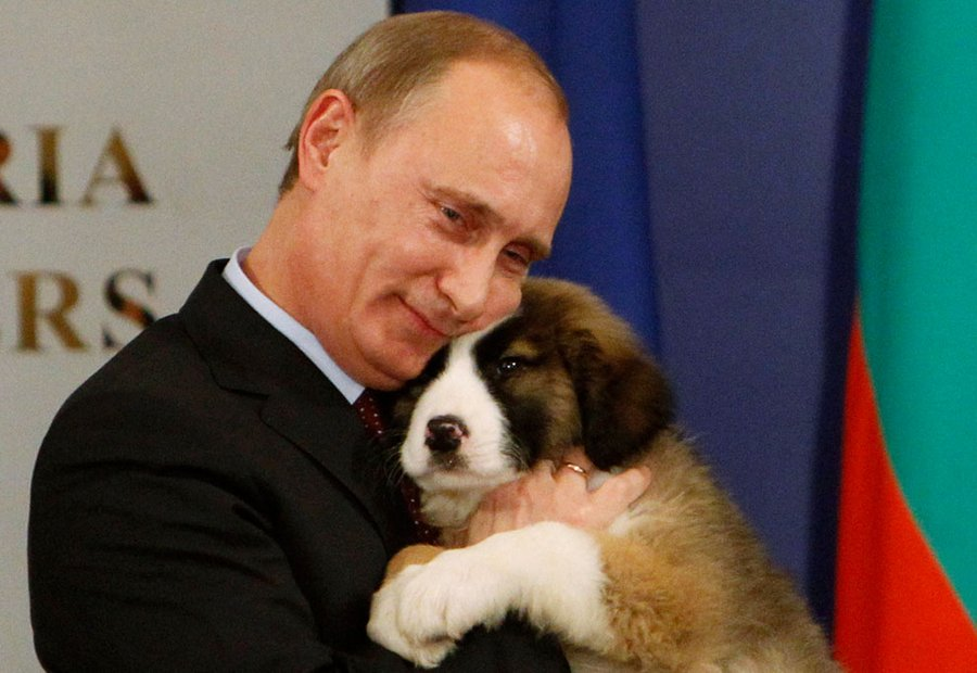 Putin with a puppy Karakachan Shepherd, who gave him the Bulgarian Prime Minister Boyko Borisov, Sofia, November 13, 2010.