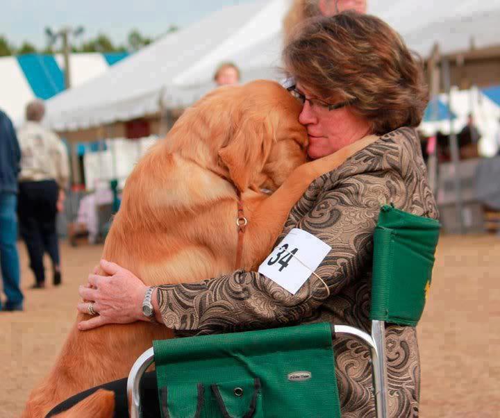 Собаки, которые очень любят обниматься