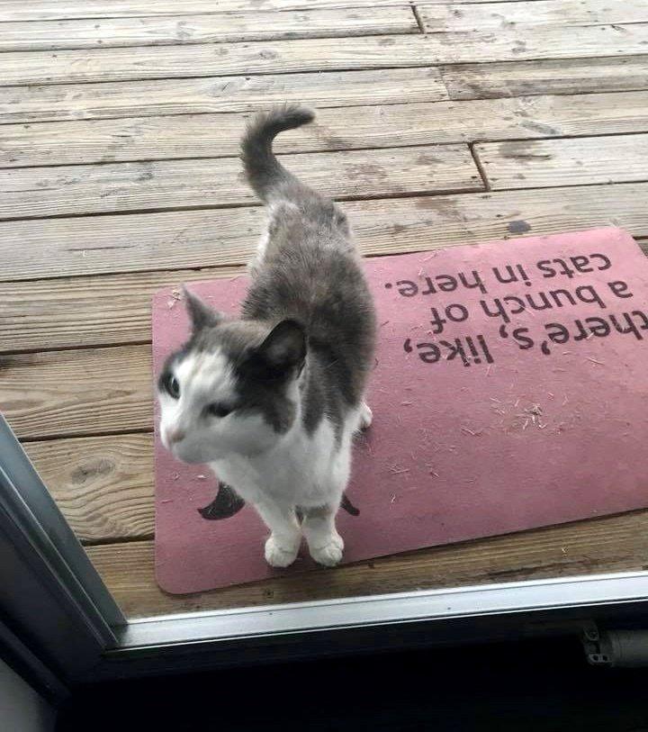Больная бездомная кошка сама…