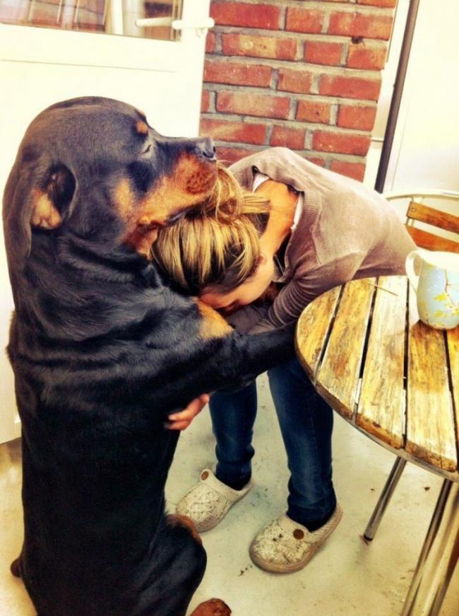 Нет никого преданнее собаки