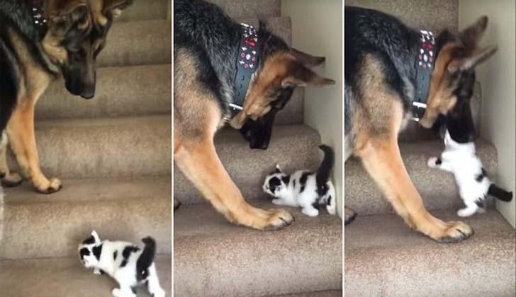 Собаке надоело смотреть, как тяжело маленькому котёнку
