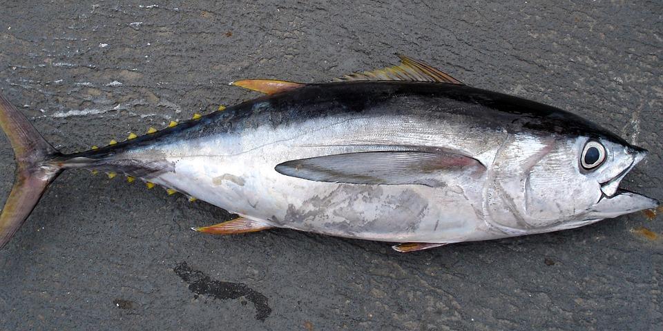 10 видов рыбы, которые стоит исключить из рациона семьи