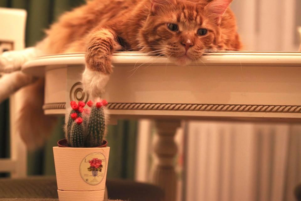 Коты всегда гуляют, где вздумается... И спящий человек коту никакое не препятствие...