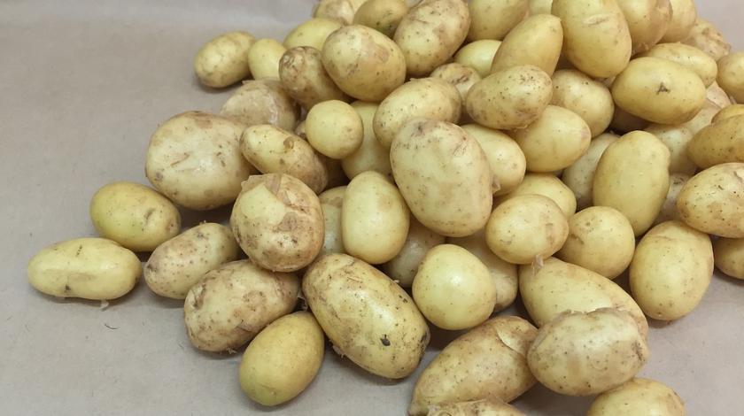 Россиян травят картошкой