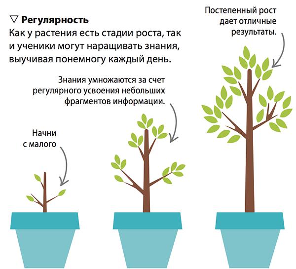 Повторять пройденное — это как ухаживать за растением. Регулярный труд дает результаты.