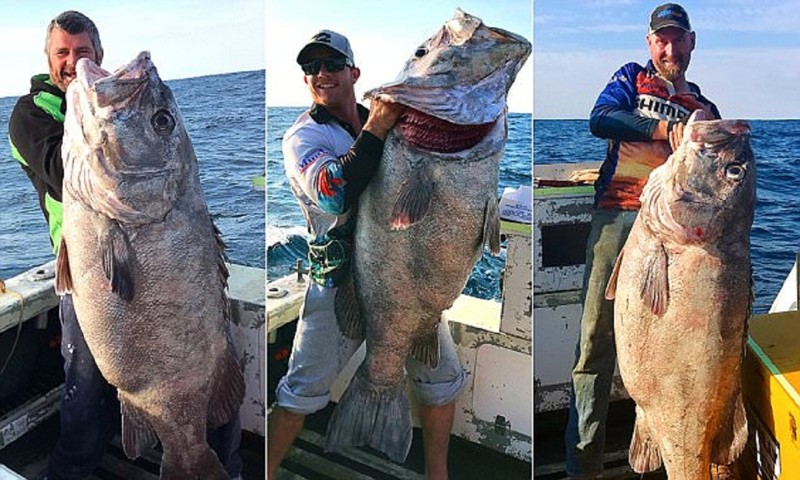 Потрясающий улов жителей Перта - завидуйте, рыбаки!