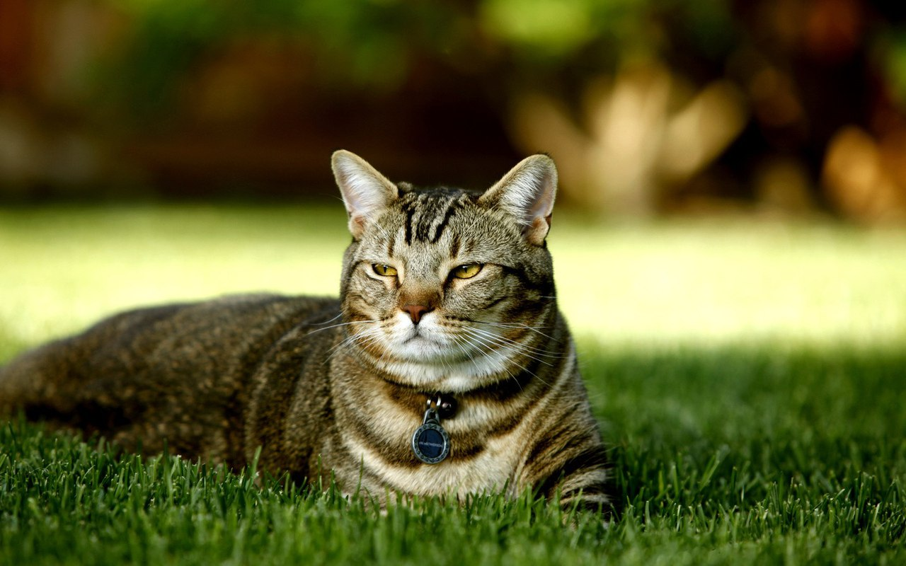 Екатеринбург. Умерла хозяйка. Осталось три кошки. Им очень нужен дом.
