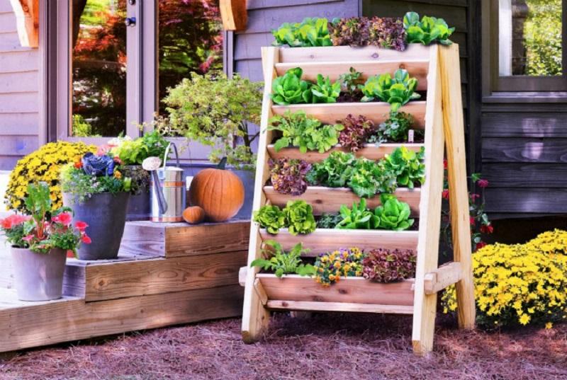 13 потрясающих идей вертикального сада