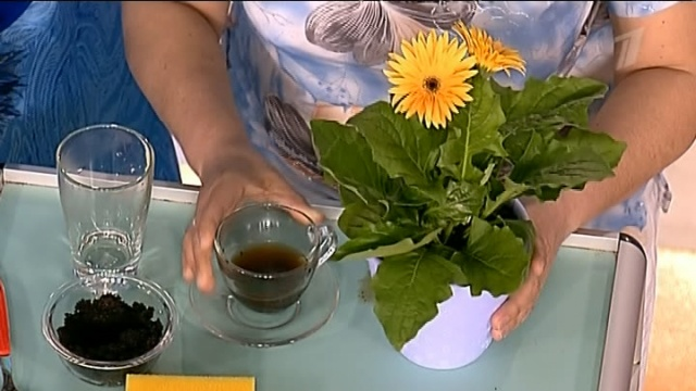 Картинки по запросу чай Удобрение для садовых растений
