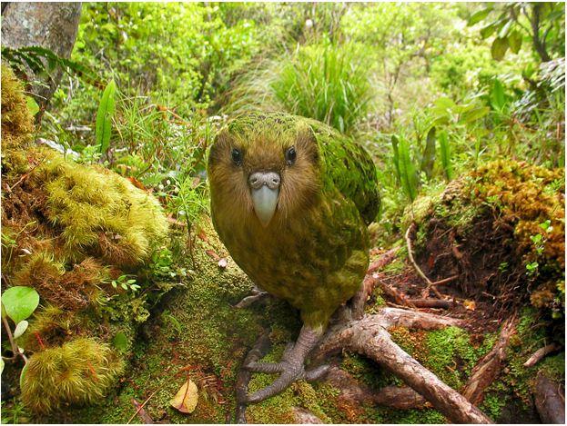 Самые редкие птицы мира (12 фото)