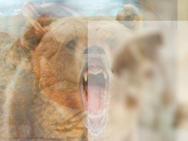 Тест на 1 минуту! Каких животных ты увидел здесь первыми, такой и характер.