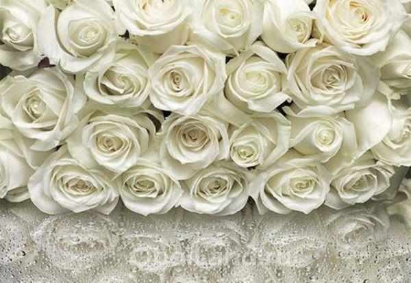 Интерьер из света и белых роз