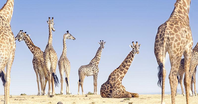 В объективе природа: потрясающие снимки с конкурса 2018 National Geographic Travel Photographer