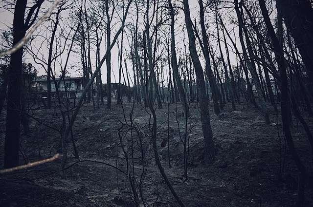 Зефирка: до и после! Он прятался в печи сгоревшего дома, как вдруг кто-то протянул к нему руки…