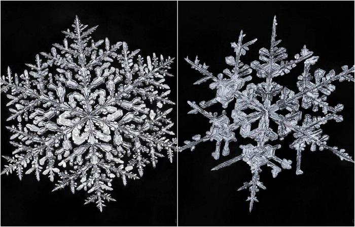 Снежинки под микроскопом. Великолепные макрофотографии канадского фотографа Дона Комаречка