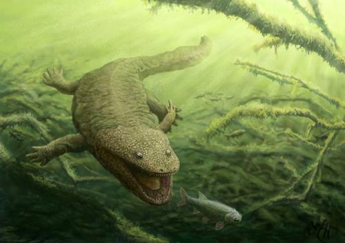 Koskinonodon — вымерший род крупных амфибий — темнопсондил.