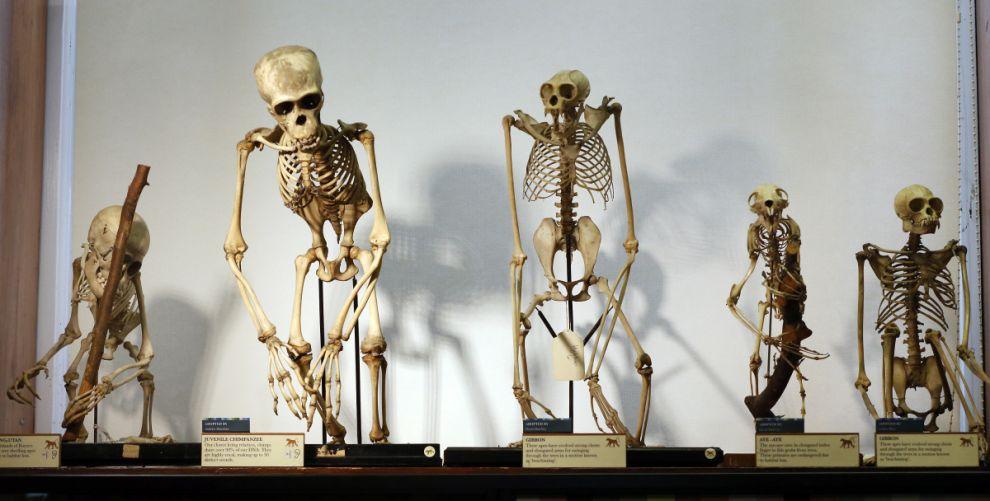 gmoz08 Лондонский музей зоологии и сравнительной анатомии Гранта