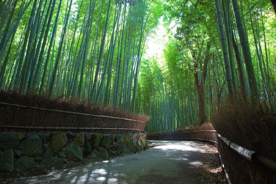 Бамбуковый коридор у подножь…