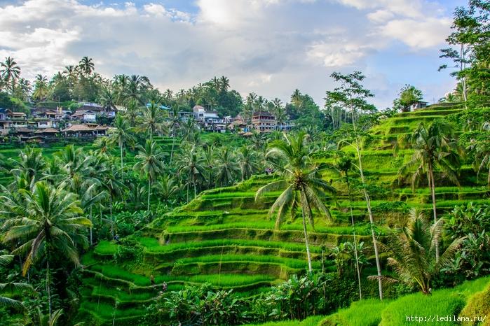 3925311_Bali_5 (700x466, 392Kb)