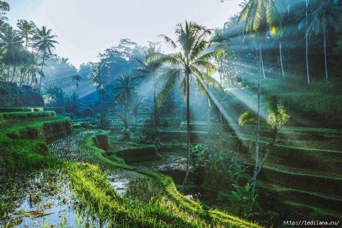 3925311_Bali_1 (700x466, 210Kb)