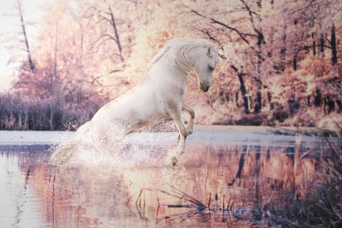 Фантастические лошади в работах Alimarije Zwaagstra