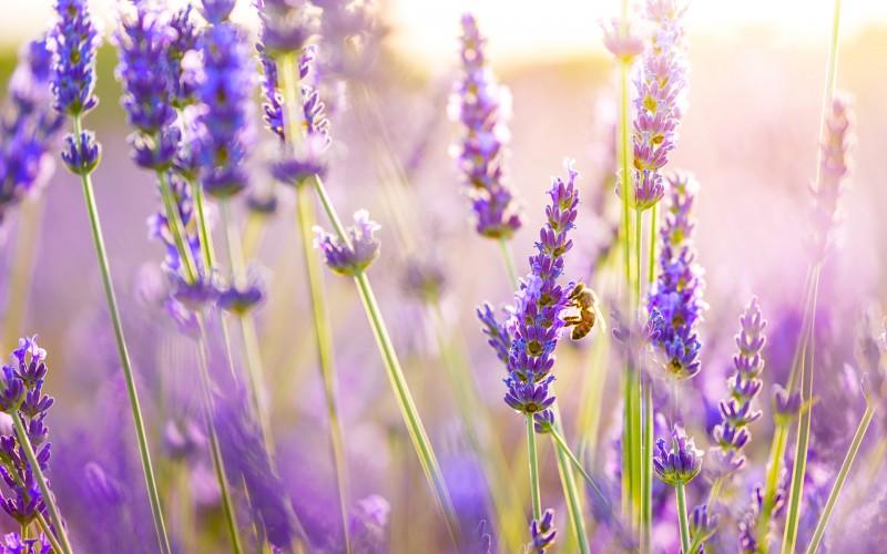 http://www.hqwalls.com/wp-content/uploads/2013/07/purple-landscape-wallpapers-17-800x500.jpg