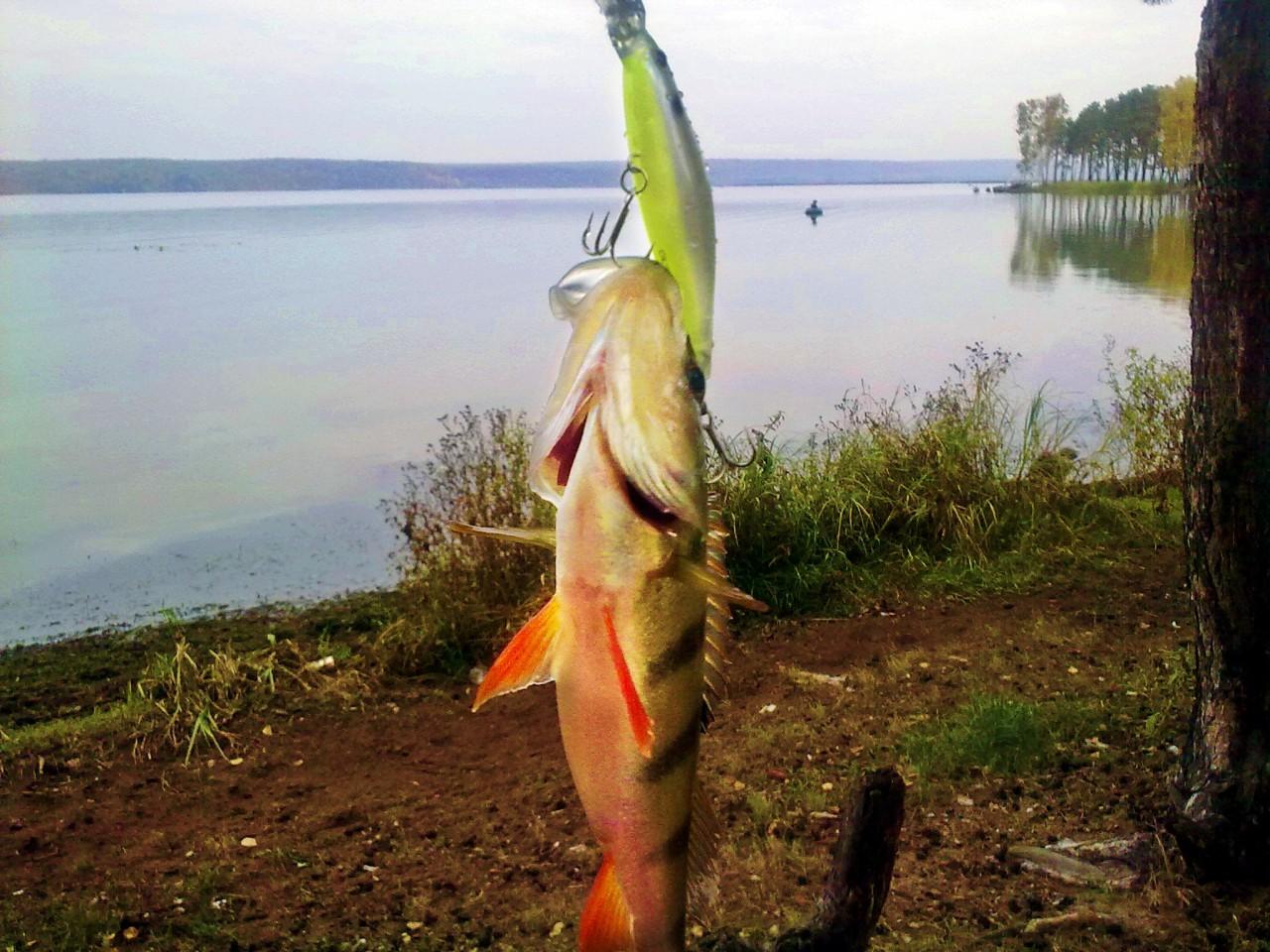 платники для рыбалки в воронежской области