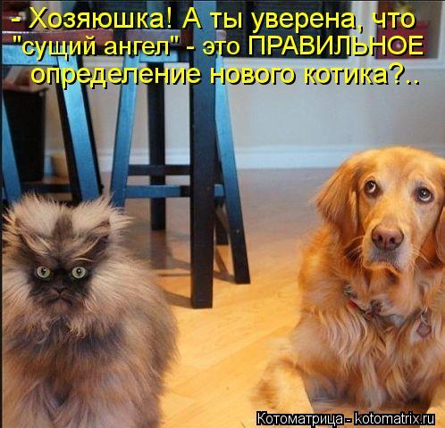 """Котоматрица: - Хозяюшка! А ты уверена, что """"сущий ангел"""" - это ПРАВИЛЬНОЕ определение нового котика?.."""