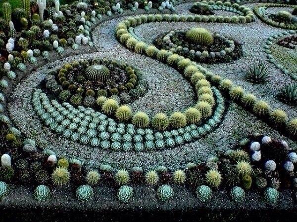 Сад из суккулентов и кактусов.