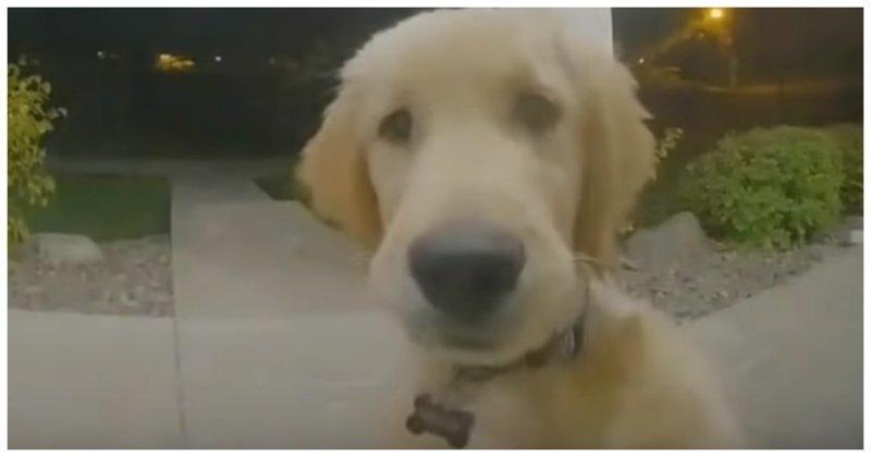 Сбежавший из дома щенок нажа…