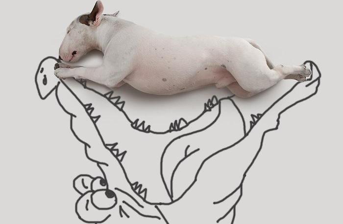 Художник рисует забавные иллюстрации, главный герой которых - бультерьер