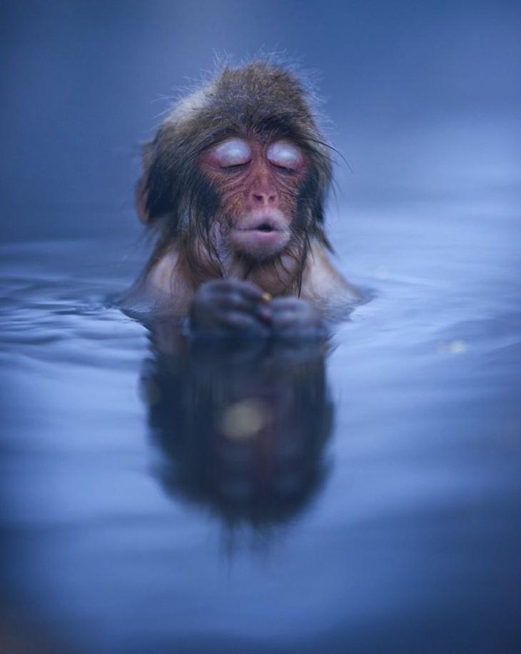 Японский парк обезьян Дзигокудани (Jigokudani)