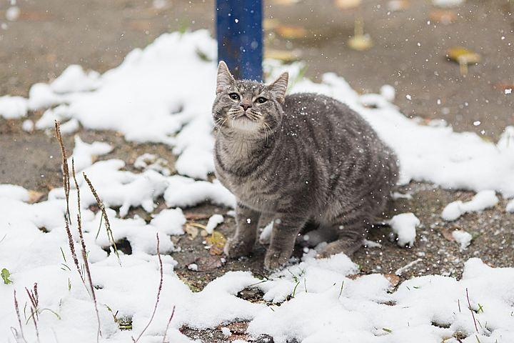 Обещанные синоптиками 20-градусные морозы обойдут Москву и область стороной