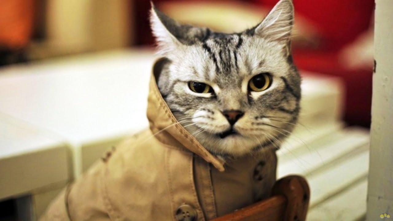 Как мой кот стал тайно жить на две семьи и на чем я его поймала