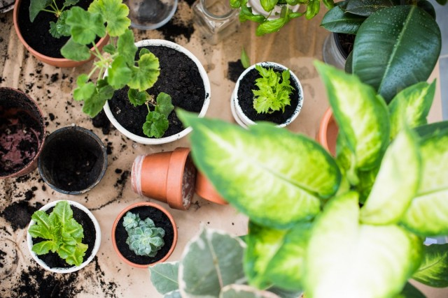 5 главных правил весеннего ухода за комнатными растениями