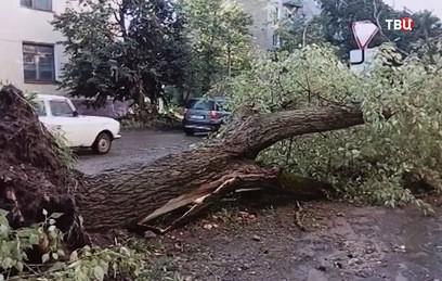На Тверскую область обрушился разрушительный ураган