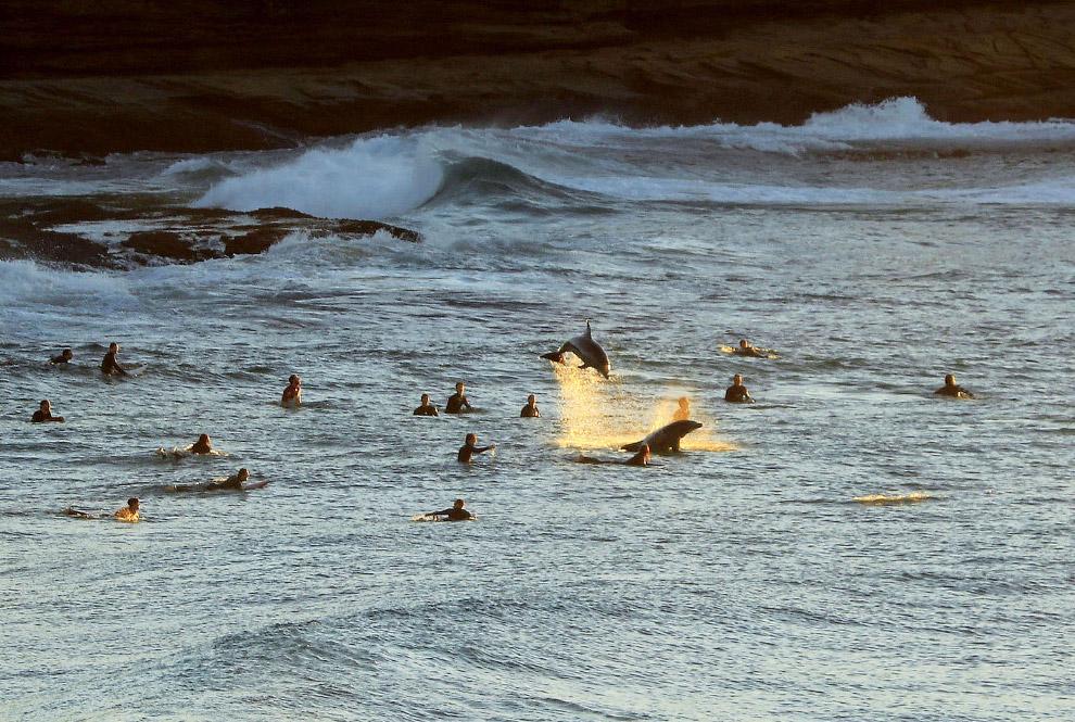 Дельфины и серверы у пляжа Тамарама в Сиднее, Австралия