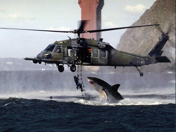 Поединок акулы и боевого вертолета ВВС.