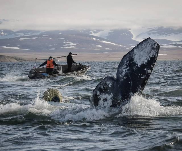 Зачем из США и Исландии едут…