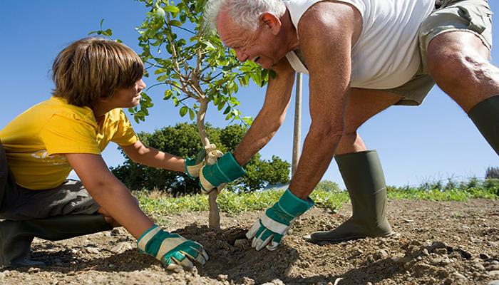 Откуда пошло «построить дом, посадить дерево и родить сына»
